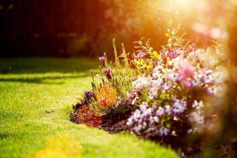 spring garden preperation