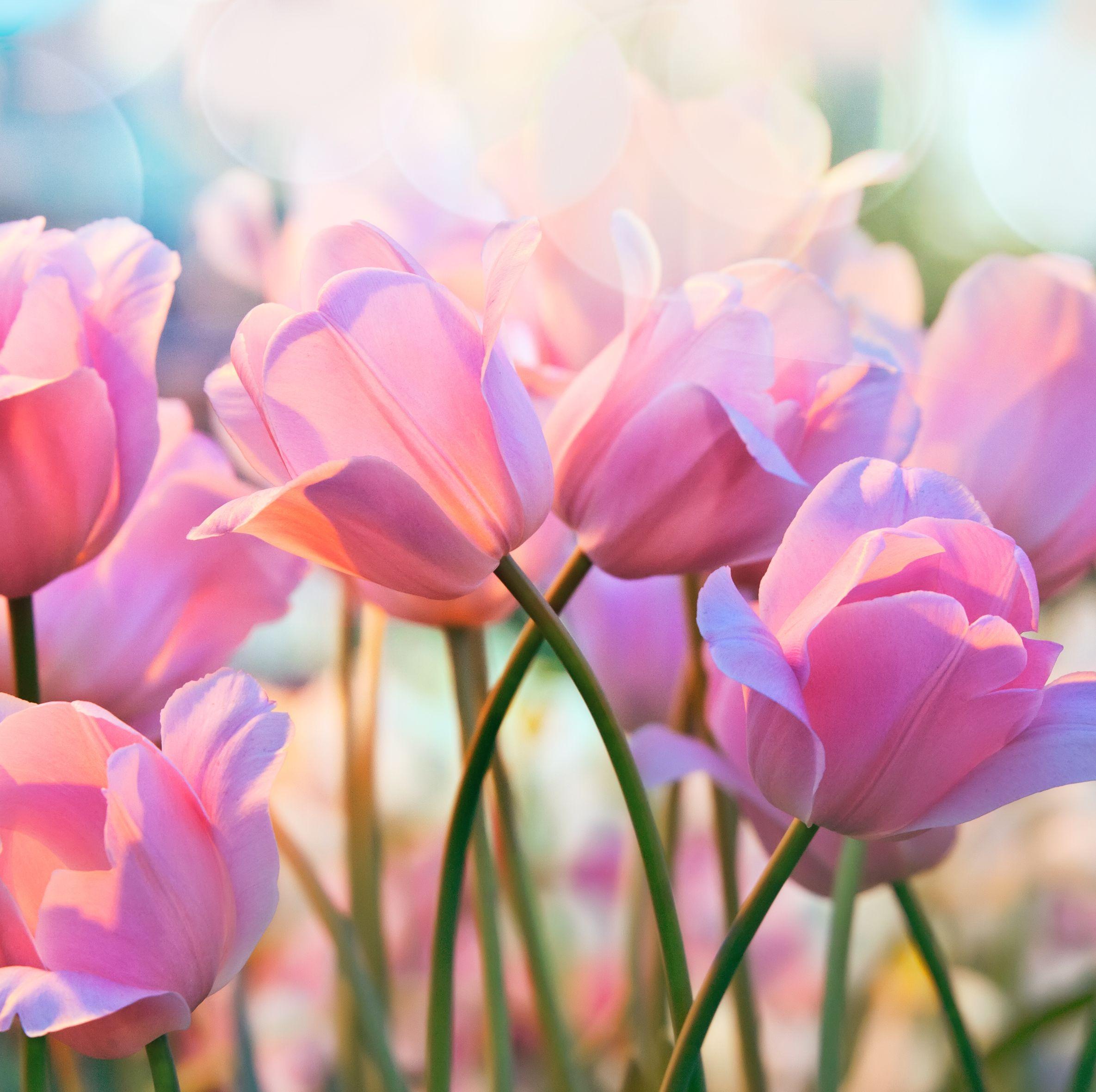 spring-quotes-1551896399.jpg?crop=0.669xw:1.00xh;0.166xw,0&resize=640:*