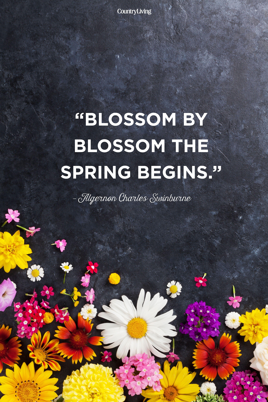 Spring Quotes Blossom by blossom