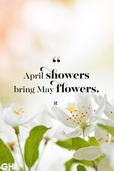 happy spring quotes   sayings about spring and flowers spring quotes unknown april showers may flowers