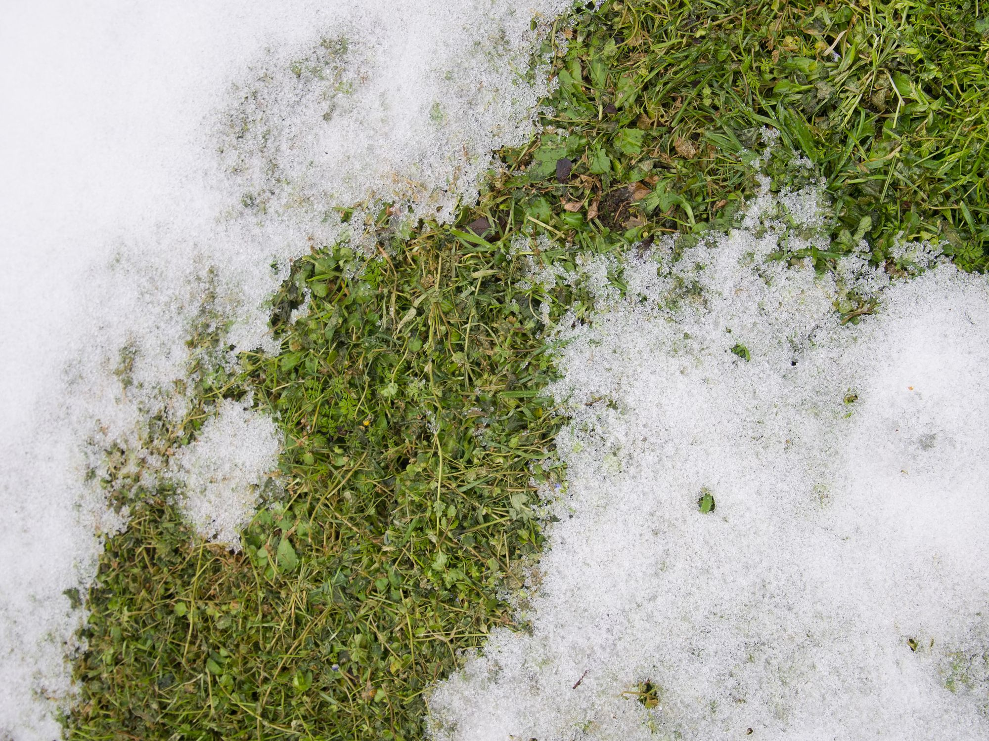 Spring Lawn Care 6 Steps To Prepare Your For Summer