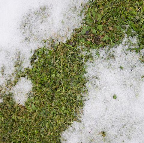 Spring thaw on garden lawn.