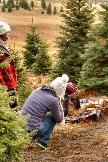 spring valley idaho best christmas tree farms near me