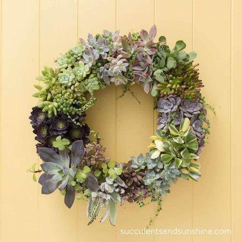 Spring Wreaths - Succulent Wreath