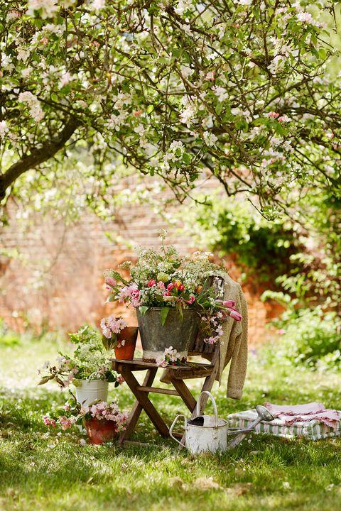 Plant, Garden, Shrub, Flowerpot, Groundcover, Spring, Backyard, Yard, Annual plant, Cart,