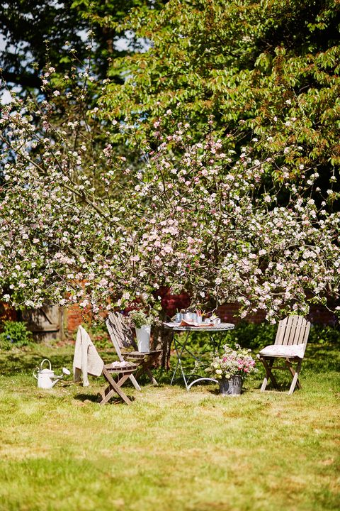 Photograph, Tree, Spring, Grass, Table, Garden, Lawn, Botany, Plant, Backyard,