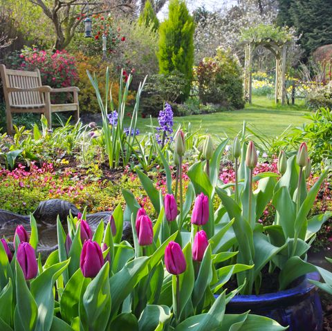 Springtime in English domestic garden.