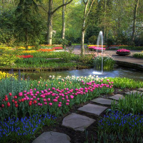 Vườn Keukenhof mùa xuân với con đường