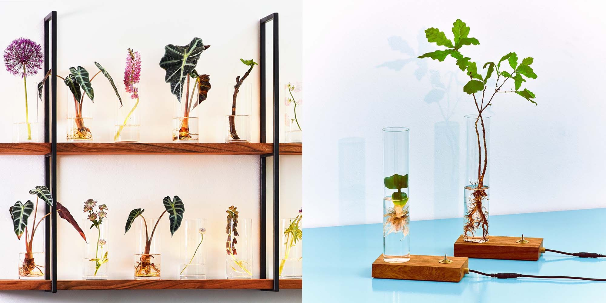 Spruitje, Green Dexter, mini ecosysteem, spruitje lamp, lamp voor planten