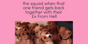 dog meme, dogs, meme, squads,