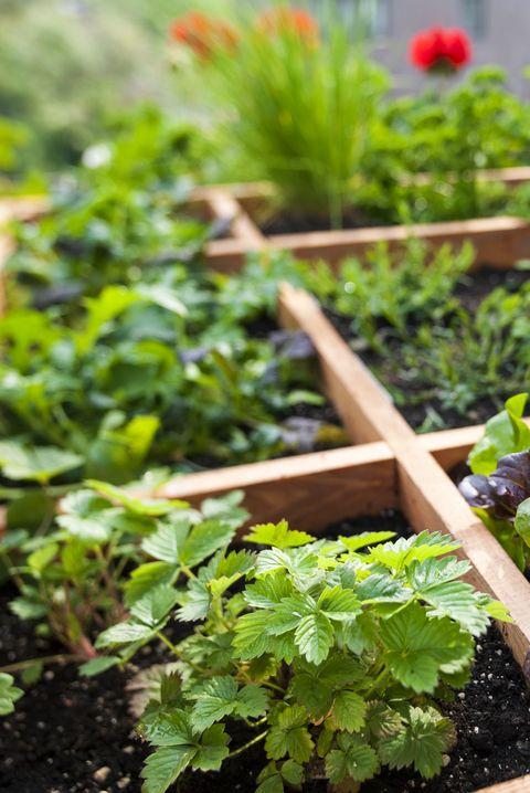 40+ Small Garden Ideas - Small Garden Designs on herb garden design plans, herb container gardens, herb knot garden design, herb landscaping, herb garden design software, herb garden layout design, herb garden ideas, herb garden planning, herb garden clip art,