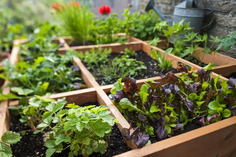 The Pros And Cons Of Square Foot Gardening What Is Square Foot