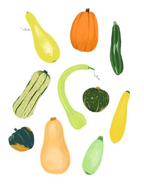 16 Types Of Squash Different Types Of Summer And Winter Squash