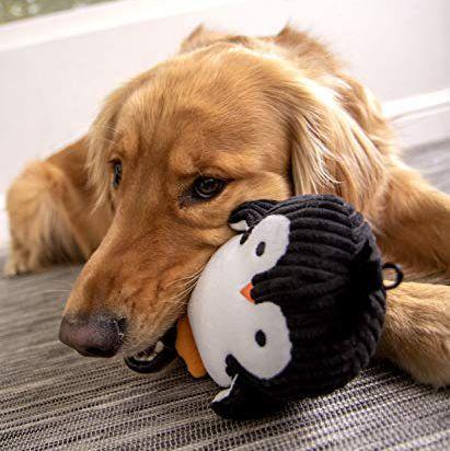 squeaky dog toys -- plush penguin