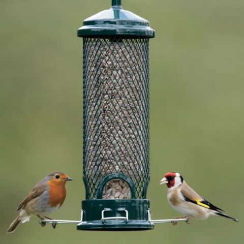 Squirrel Buster Mini seed feeder - RSPB