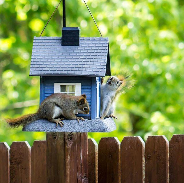 squirrel proof bird feeders