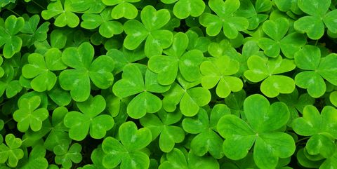 st patricks day facts