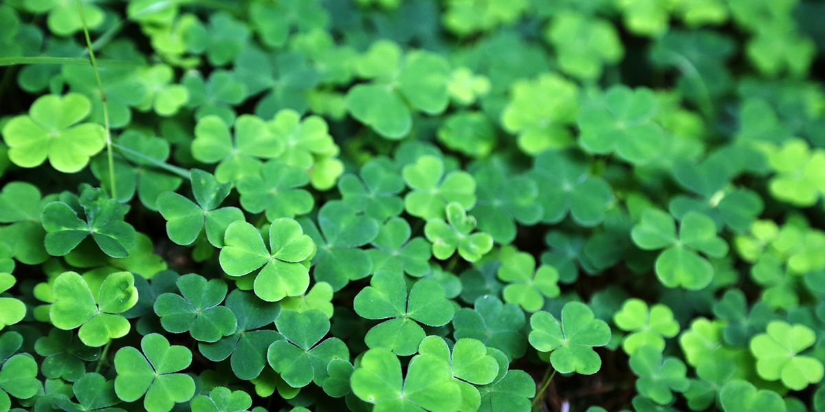 St Patricks Day Quotes Simple 48 St Patrick's Day Quotes Best Irish Sayings For St Paddy's Day