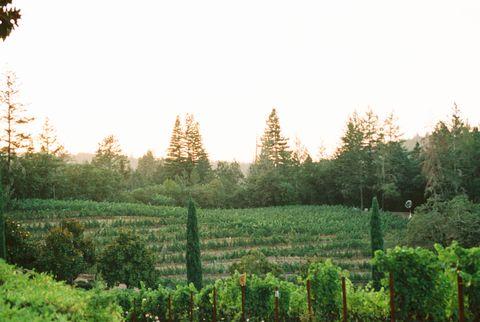 paysage de la vallée de Napa