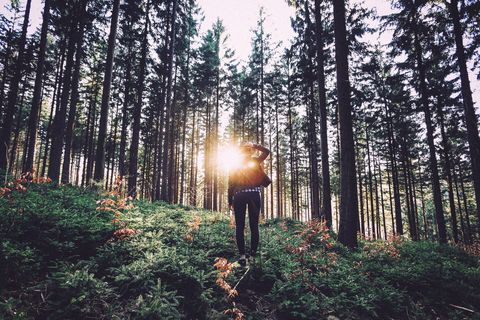 Tree, Forest, Natural environment, Nature, Woodland, Natural landscape, Old-growth forest, Spruce-fir forest, Sunlight, Light,