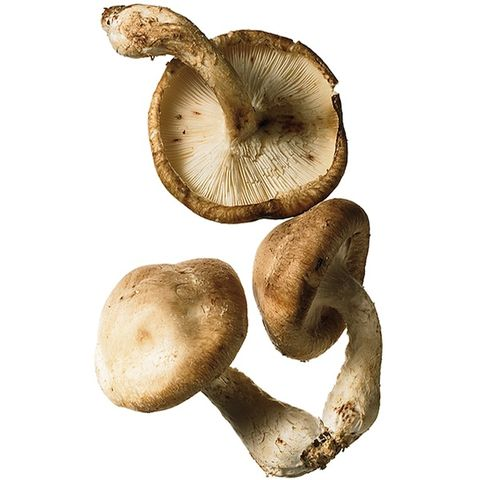 Quick & delicious mushroom ideas