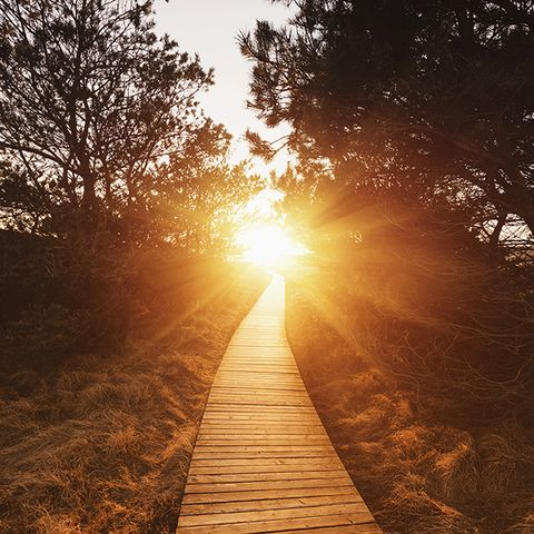 Wood, Sun, Branch, Natural landscape, Sunset, Sunrise, Astronomical object, Sunlight, Amber, Backlighting,