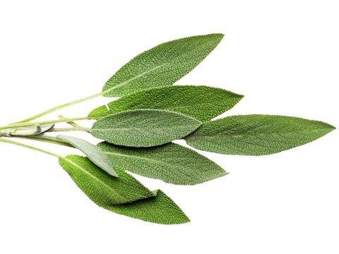 healing herbs: sage