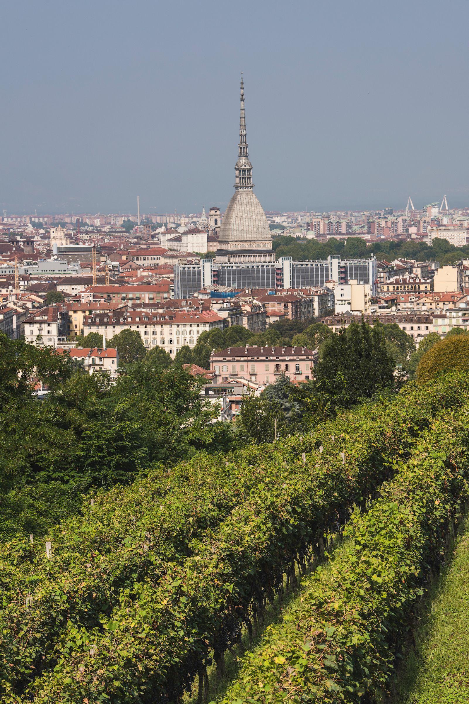 L'incredibile mondo delle vigne di città