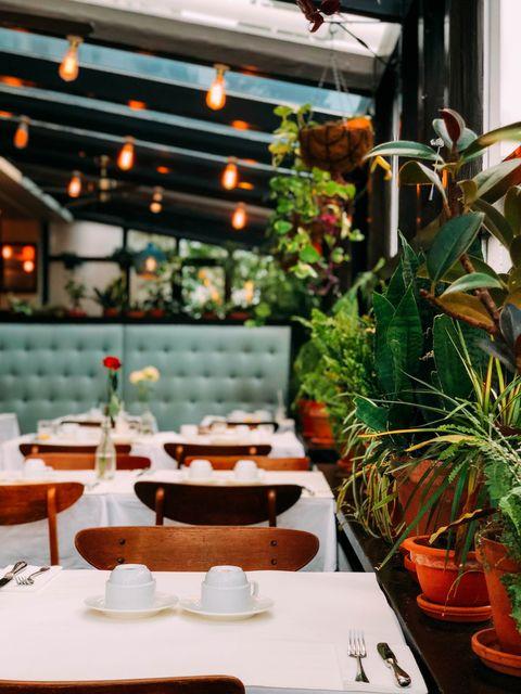 Restaurant, Houseplant, Brunch, Room, Interior design, Plant, Table, Flower, À la carte food, Building,