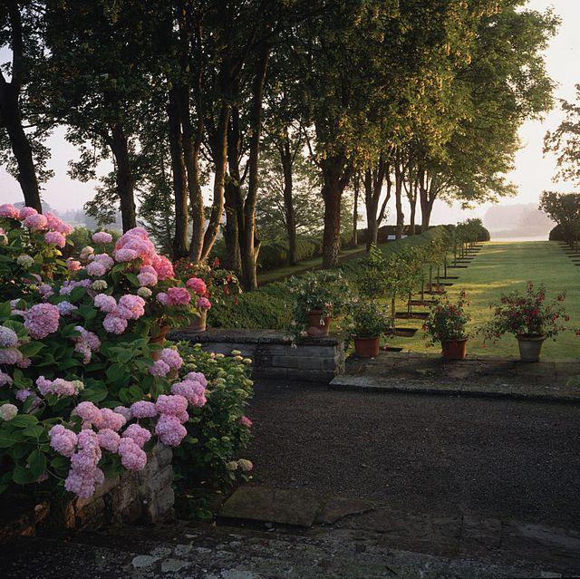 best plants for shade schloss freudenberg veranda