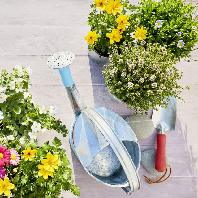 still life of colorful flowering garden plants, watering can, shovel and garden gloves on wooden background in summer
