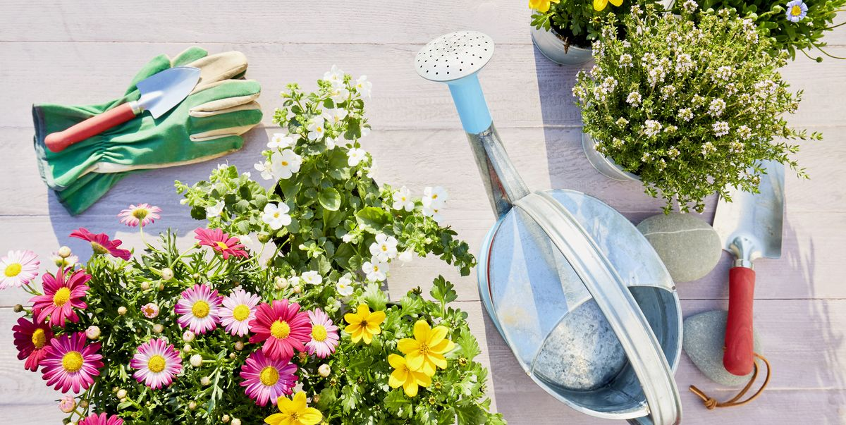 8 simple garden hacks using everyday items you have at home