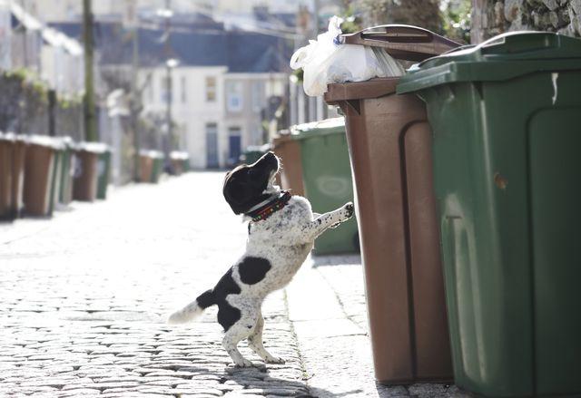 how to stop dog raiding bin