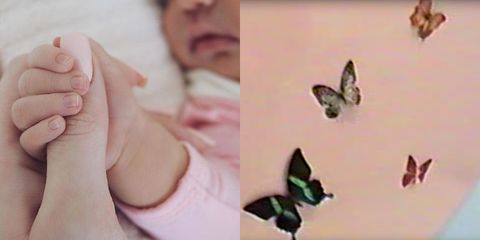 Butterfly, Moths and butterflies, Insect, Finger, Organism, Pollinator, Adaptation, Hand, Pieridae, Thumb,