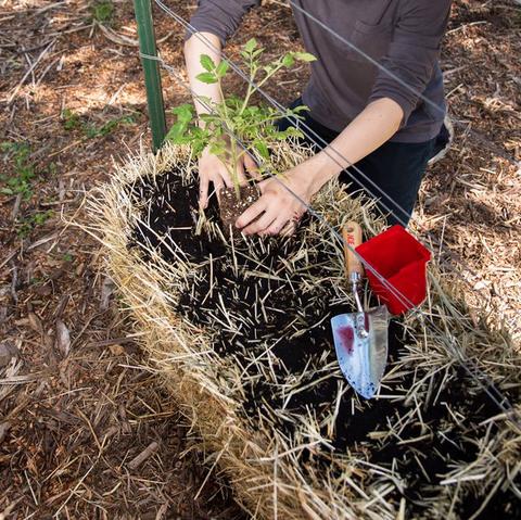 What Is Straw Bale Gardening? - How to Start a Straw Bale Garden?