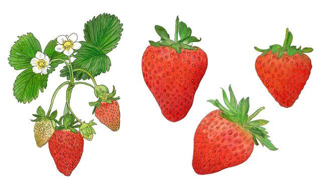 ameer strawberries