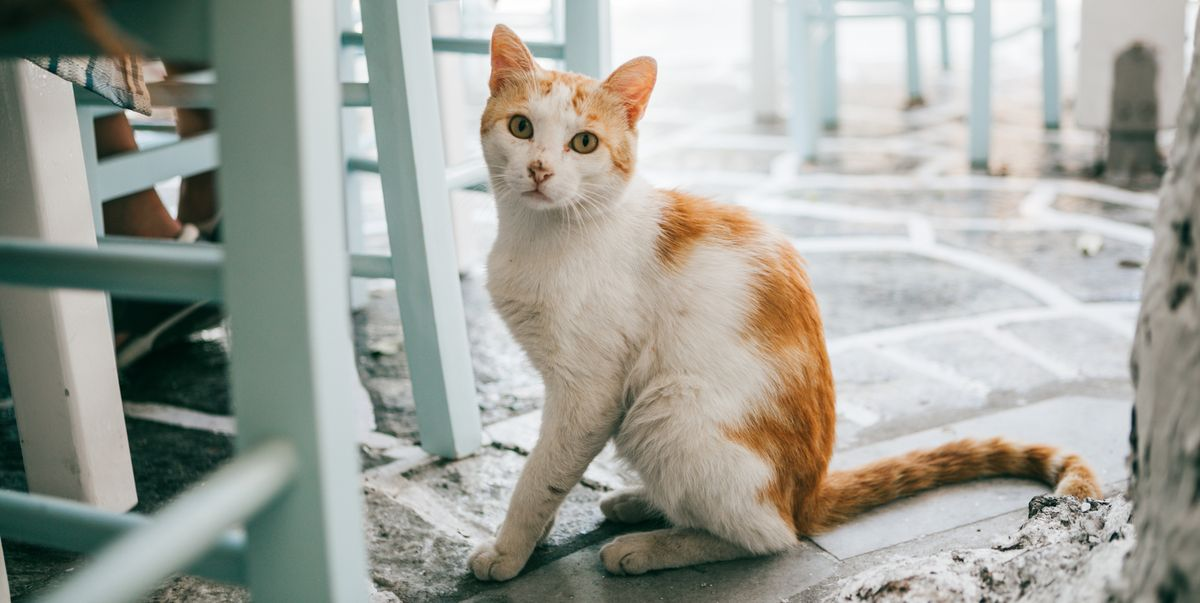 How To Treat Dry Skin On Cats Symptoms Causes And Home Remedies
