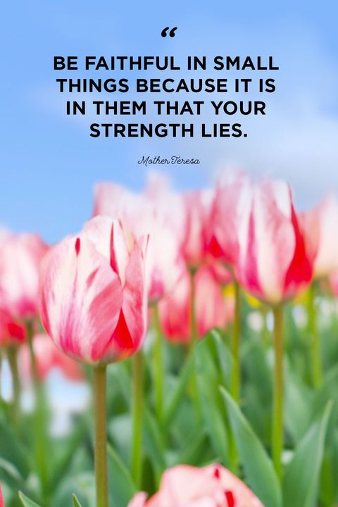 20+ Short Quotes About Strength - Quotes for Women About ...