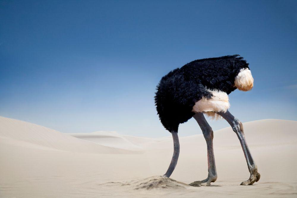 struisvogel-kop-in-zand-1583247223.jpg
