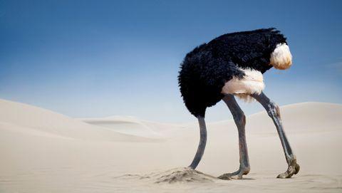 Struisvogel steekt kop in zand