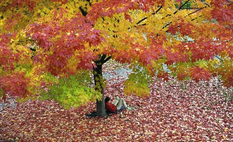 Student reads while enjoying the fall foliage