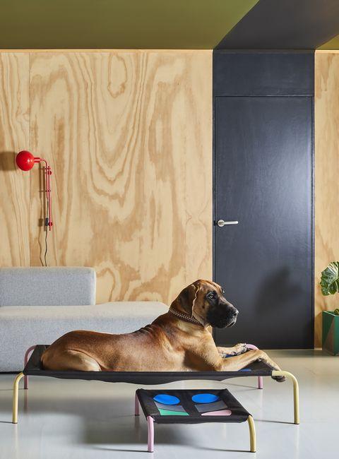 studio rhonda x hik9's new modern pet bed range