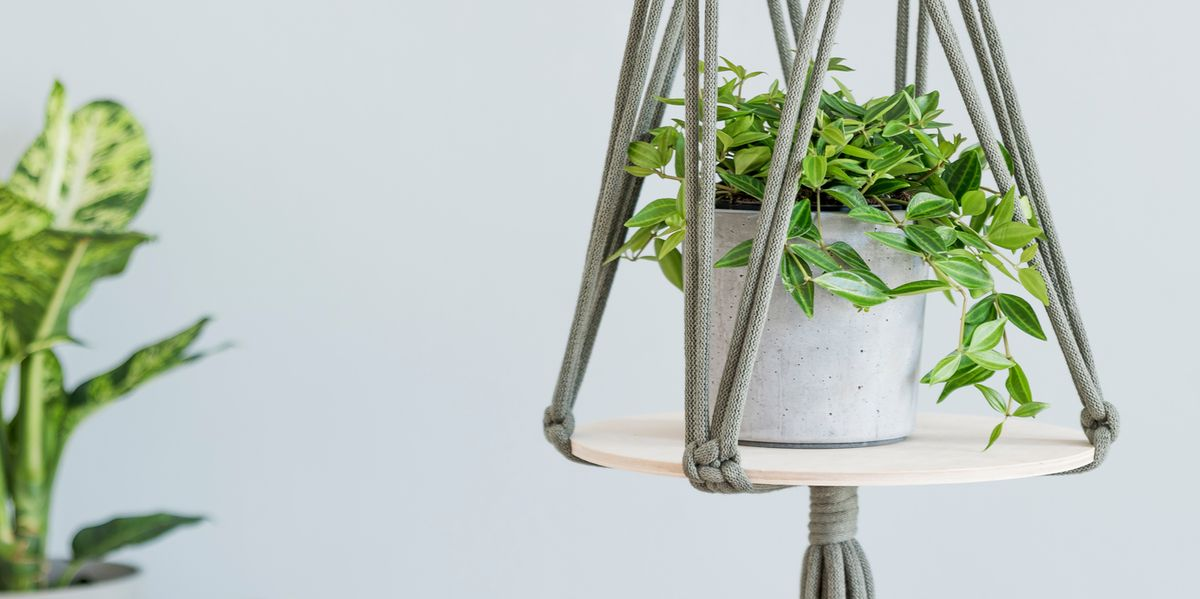 18 Best Indoor Hanging Plants