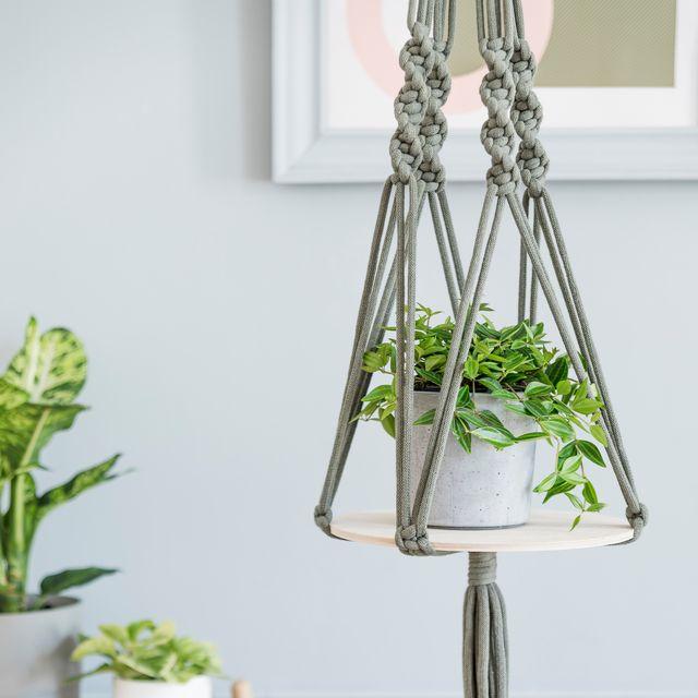 18 Best Indoor Hanging Plants Real
