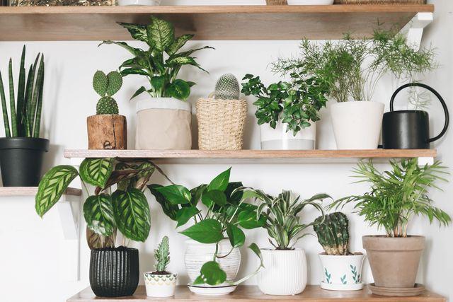 観葉植物のおしゃれな鉢&鉢カバー8選 メイン画像