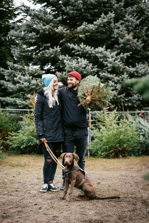 Stylish Young Couple With Dog Outdoors About To Take Home Pine Tree For Christmas