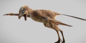 tiny bird dino