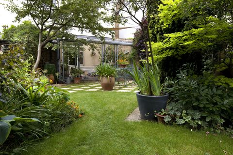 Suburban garden and lawn, Kingston Upon Thames, England, UK