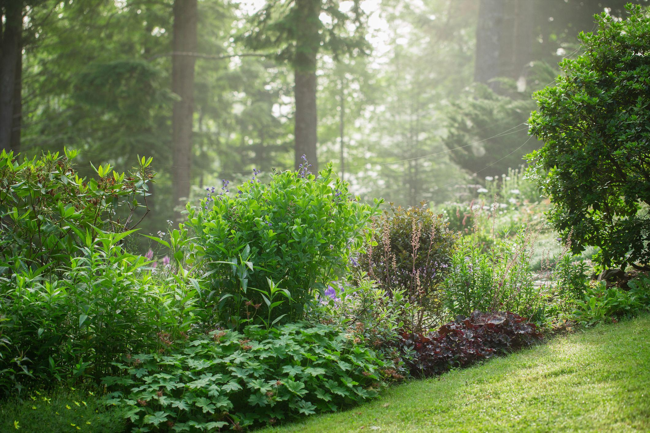 20 Perennials That Thrive in Shade