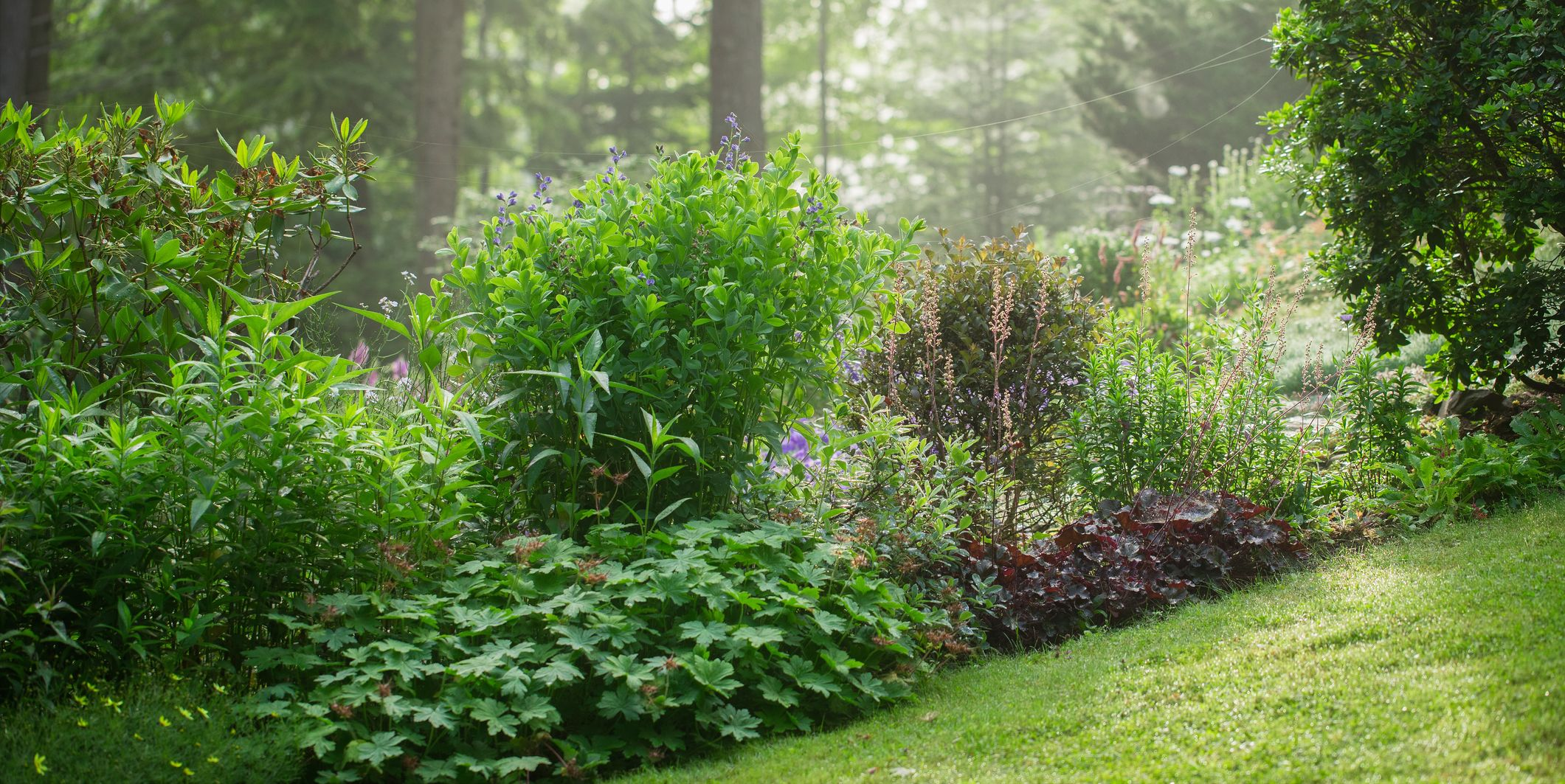 20 Perennials That Will Actually Thrive in Shade
